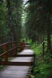 Sentiero nel bosco con i punti Fotografia Stock