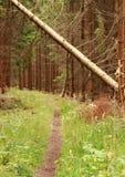 Sentiero nel bosco con l'albero caduto da una tempesta di autunno Fotografie Stock Libere da Diritti
