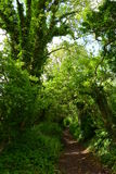 Sentiero nel bosco danese Fotografia Stock