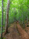Sentiero nel bosco della primavera fotografie stock