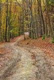 Sentiero nel bosco di autunno fra gli alberi fotografia stock libera da diritti