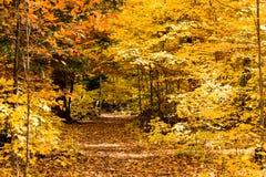 Sentiero nel bosco di caduta Immagini Stock