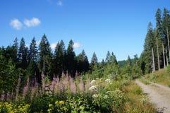 Sentiero nel bosco di estate Fotografia Stock Libera da Diritti