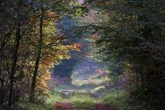 Sentiero nel bosco di Fontainebleau nella stagione di autunno Immagini Stock Libere da Diritti