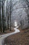 Sentiero nel bosco di inverno Fotografia Stock Libera da Diritti