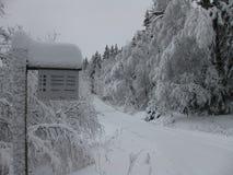 Sentiero nel bosco di Snowy fotografie stock libere da diritti