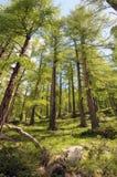 Sentiero nel bosco di Sunnegga Fotografia Stock