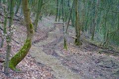Sentiero nel bosco in Germania fotografia stock libera da diritti