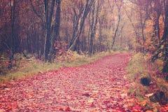 Sentiero nel bosco a Glasgow Immagini Stock