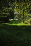 Sentiero nel bosco lungo lo stagno Fotografia Stock Libera da Diritti