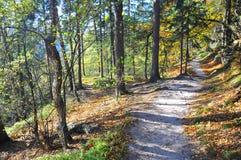 Sentiero nel bosco sabbioso nella caduta immagine stock libera da diritti