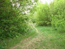 Sentiero nel bosco selvaggio in primavera immagini stock