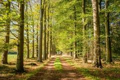 Sentiero nel bosco su un pomeriggio Tankenberg, Oldenzaal, Paesi Bassi di ottobre immagini stock libere da diritti