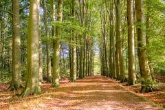 Sentiero nel bosco su un pomeriggio Tankenberg, Oldenzaal, Paesi Bassi di ottobre immagine stock libera da diritti