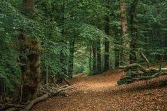 Sentiero nel bosco sulla collina fotografie stock