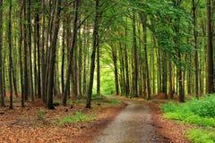 Sentiero nel bosco tranquillo Immagini Stock Libere da Diritti