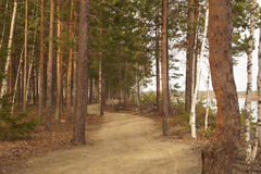 Sentiero per pedoni attraverso i precedenti della foresta Immagine Stock Libera da Diritti