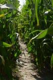 Sentiero per pedoni attraverso il campo di grano Immagine Stock
