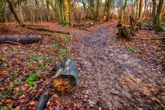 Sentiero per pedoni attraverso il legno Immagine Stock