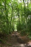 Sentiero per pedoni attraverso il legno Fotografia Stock Libera da Diritti
