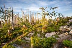 Sentiero per pedoni attraverso la foresta selvaggia nella riserva naturale della catena montuosa di Sumava fotografia stock libera da diritti