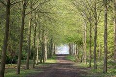 Sentiero per pedoni attraverso la foresta verde degli alberi di faggio in primavera Fotografia Stock