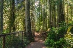 Sentiero per pedoni attraverso una foresta Fotografia Stock Libera da Diritti