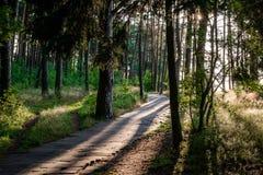 Sentiero per pedoni attraverso una foresta Fotografia Stock