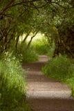 Sentiero per pedoni che conduce attraverso la foresta verde maestosa Fotografie Stock