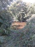 Sentiero per pedoni con gli alberi Fotografia Stock