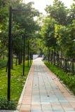 Sentiero per pedoni con gli alberi e l'erba Immagine Stock