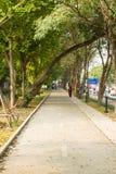Sentiero per pedoni con gli alberi e l'erba Fotografie Stock Libere da Diritti