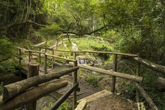 Sentiero per pedoni con il ponte di legno sulla foresta con un fiume Immagini Stock