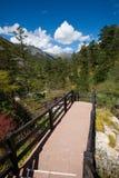 Sentiero per pedoni con la foresta in autunno Immagini Stock Libere da Diritti