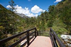 Sentiero per pedoni con la foresta in autunno Immagini Stock