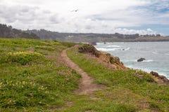 Sentiero per pedoni costiero attraverso i wildflowers con il volo del gabbiano qui sopra, Fotografia Stock