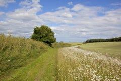 Sentiero per pedoni dei wolds di Yorkshire Fotografia Stock