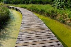 Sentiero per pedoni del ponte di legno in foresta Immagine Stock Libera da Diritti