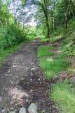 Sentiero per pedoni del terreno boscoso fotografia stock