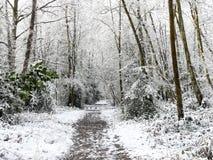 Sentiero per pedoni del terreno boscoso nella neve di inverno, terreno comunale di Chorleywood, Hertfordshire fotografie stock