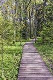 Sentiero per pedoni della foresta Fotografie Stock Libere da Diritti