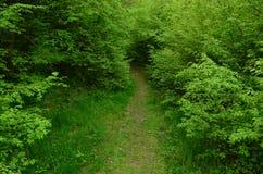 Sentiero per pedoni della foresta Fotografie Stock