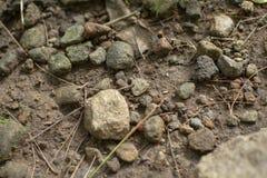 Sentiero per pedoni della ghiaia della sporcizia nella foresta fotografia stock