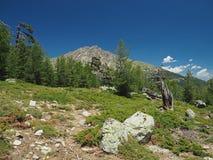 Sentiero per pedoni della montagna di paesaggio in prato sui alpes corsician con grande Fotografie Stock