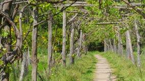 sentiero per pedoni della vigna, passante tramite il percorso stock footage