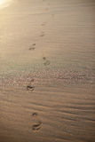 Sentiero per pedoni delle stampe del piede sulla sabbia della spiaggia Immagine Stock