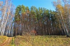 Sentiero per pedoni di autunno in legno Fotografia Stock