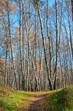 Sentiero per pedoni di autunno in sosta Immagine Stock