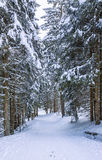 Sentiero per pedoni di inverno Fotografia Stock