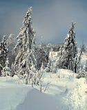 Sentiero per pedoni di inverno con gli alberi Fotografia Stock Libera da Diritti